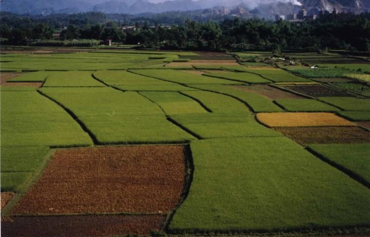 rice field thai nguyen